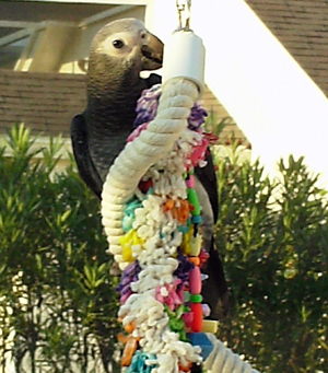 African Grey Toys 4